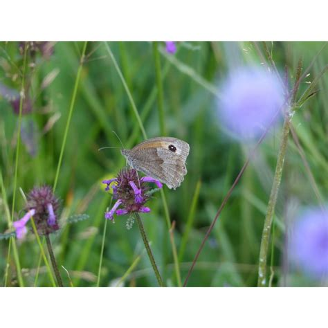 Clay Soil Meadow Mix   British Wildflower & Grass Seed