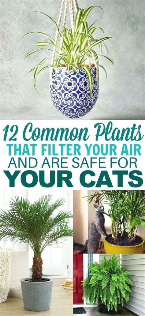 12 Common Houseplants Safe for Cats That Filter Your Air
