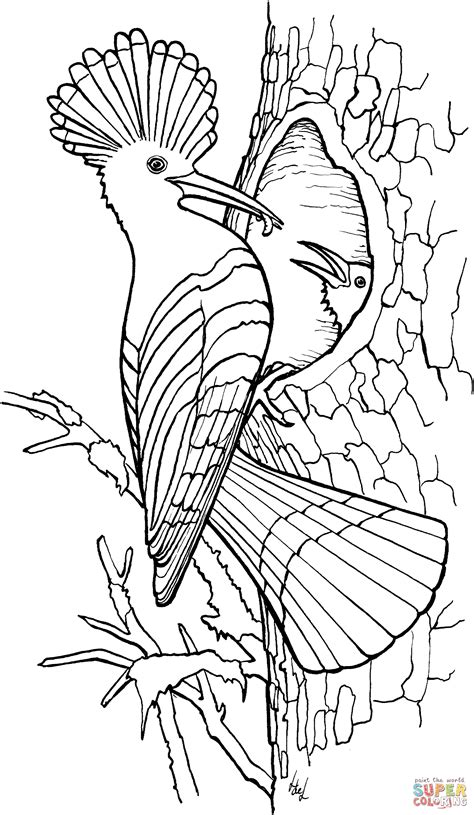 Hoopoe coloring page | Free Printable Coloring Pages