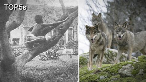 5 Incredible Stories of Feral Children Being Raised by