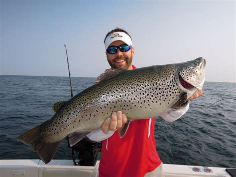 Eastern Lake Ontario's Brown Trout by Chris Shaffer