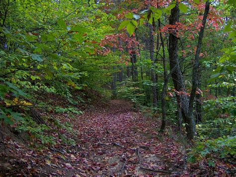 The Ghost House Trail Is The Most Haunted Hike In Tennessee