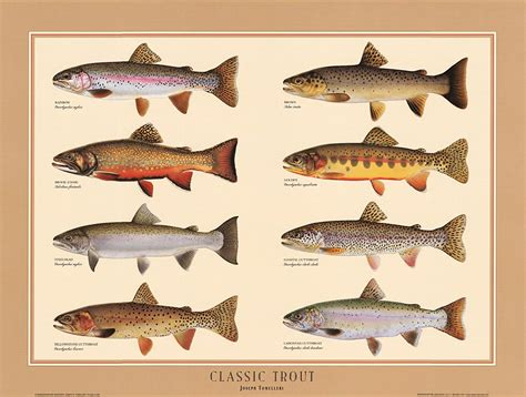 Trout Fishing Guide For 2020   FisherVerse