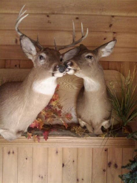60 best images about Taxidermy on Pinterest | Wall mount