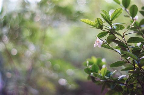 Flowers on bokeh blur background ~ Nature Photos