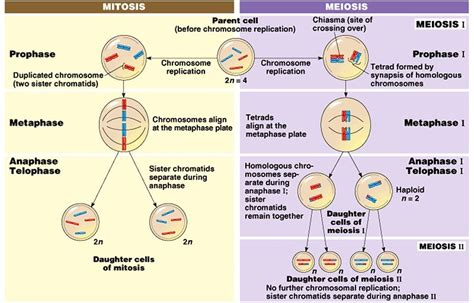 Unit 4: Cell Cycle